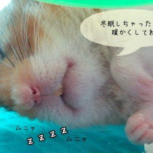 冬眠について